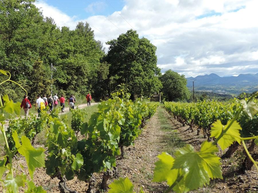 Le groupe à travers les vignes