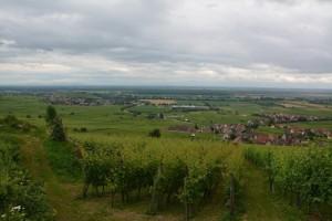 Dans les vignes d'Alsace